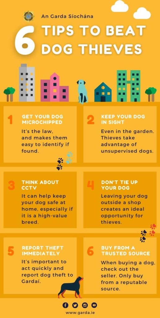 dog-safety-infograph